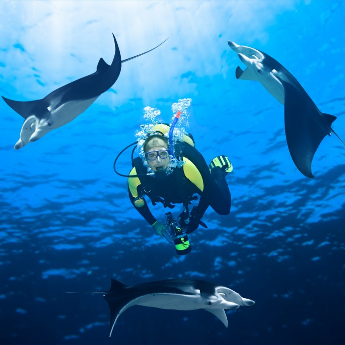 Feeding the manta rays in Maldives
