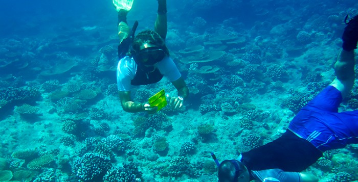 LUX* Maldives implements a coral reef monitoring project